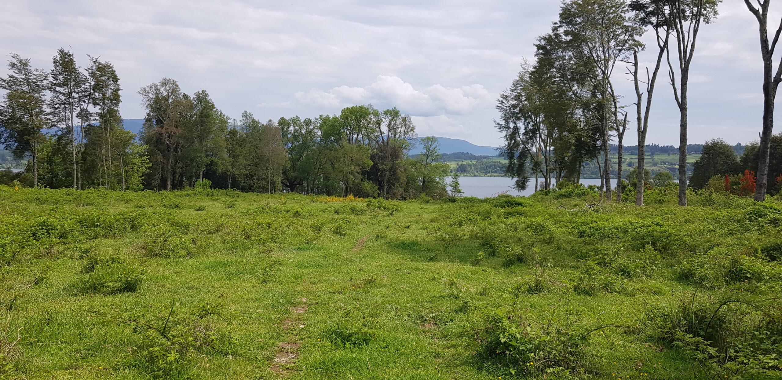 Lago Panguipulli 0,5 ha (0,29 ha útiles) lote 5/ acceso