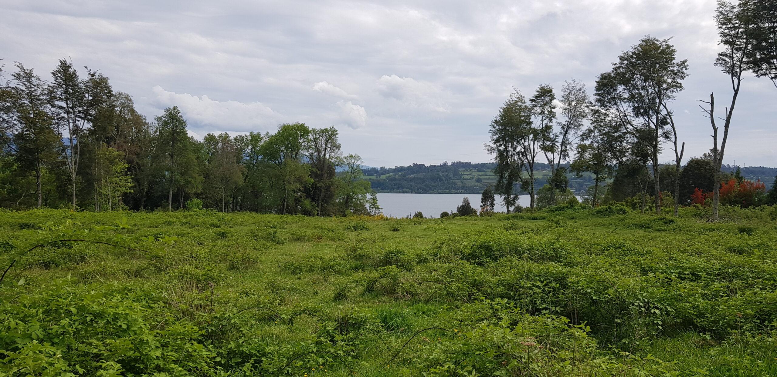 Lago Panguipulli 0,5 ha (0,25 ha útiles) lote 6/ acceso