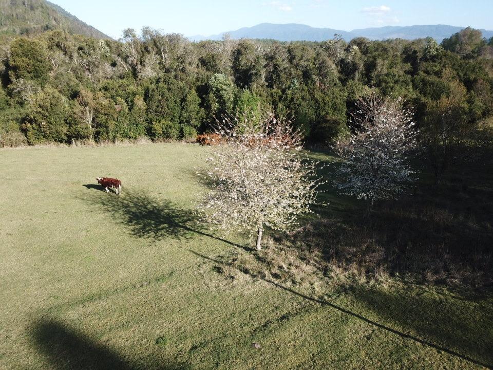 Panguipulli, parcela 2,85 ha
